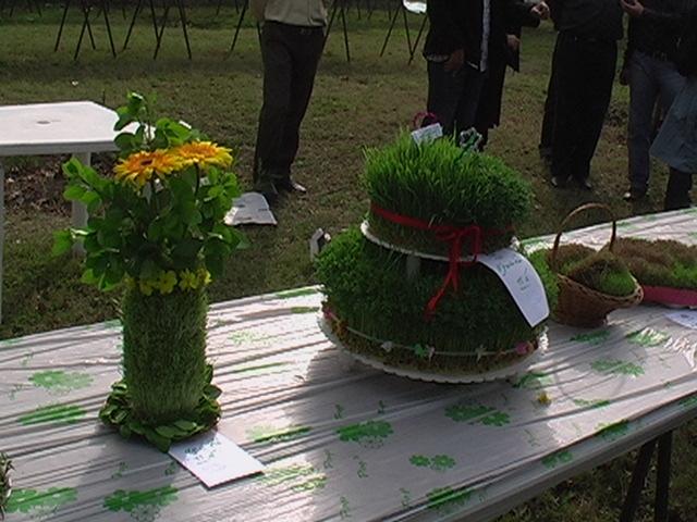 نحوه کاشت سبزه به شکل مزرعه سبزه نوروز نازخاتون مجله اینترنتی بانوان