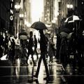 عکس هایی با مضمون روزهای بارانی , عکس های بارانی , عکس های زیبا از لحظات بارانی , عکس طبیعت ,عکس های طبیعت ,عکس های باران ,عکس باران ,والپیپرهای باران ,والپپیر باران ,تصاویر باران , تصویر باران ,عکس های زیبا از باران ,تصاویر زیبا از باران ,عکس های هوای بارانی ,والپیپرهای بارانی , روزهای بارانی ,عکس های روزهای بارانی , عکس های قطره های باران ,عکس هوای بارانی ,والپیپر هوای بارانی ,روز بارانی ,باران ,عکس های زیبا از قطره های باران , عکس های دیدنی از طبیعت , قطره های باران , روزهای بارانی ,عکس روزهای بارانی , تصاویر قطره های باران ,عکس زیبا از قطره های باران , عکس قطره های باران ,قطره باران , قطره های باران , طبیعت در باران ,دانلود تصاویر باران ,دانلود عکس های باران
