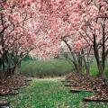 عکس بهار , عکس های بهار , والپیپر بهار , والپیپرهای بهار , تصویر بهار , تصاویر بهار , دانلود عکس های بهار , دانلود والپیپرهای بهار , عکس های بهاری , والپیپرهای بهاری , گالری عکس های بهار , عکس های با کیفیت از بهار , والپیپرهای با کیفیت از بهار , عکس فصل بهار , عکس های فصل بهار , والپیپر فصل بهار , والپیپرهای فصل بهار , تصویر فصل بهار , تصاویر فصل بهار , دانلود عکس های فصل بهار , دانلود والپیپرهای فصل بهار , عکس های فصل بهاری , والپیپرهای فصل بهاری , گالری عکس های فصل بهار , عکس های با کیفیت از فصل بهار , والپیپرهای با کیفیت از فصل بهار , دانلود عکس پس زمینه ویندوز, دانلود والپیپر فصل بهار, دانلود والپیپر بهار برای ویندوز, دانلود والپیپر بهار, دانلود والپیپر های بهاری, دانلود والپیپر های بهاری با کیفیت HD, دانلود والپیپر های فصل بهار , عکس های فصل بهار , عکسهای بهاری , منظره های بهاری , عکس طبیعت بهاری , طبیعت بهاری, عکس برف, عکس بهار, عکس های طبیعت, فصل بهار,ی, کلبه جنگلی , عکس از فصل بهار, عکس بهار, عکس بهار, عکس های زیبا از فصل بهار, عکس هایی از فصل بهار , زيبايي هاي فصل بهار,شعر فصل بهار