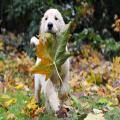 سگ,سگ آبی,سگ آپارتمانی,سگ ارمنی,فروش سگ ارزان,سگ اسکیمو,سگ اشپیتز,سگ اشپیتز تریر,سگ اشمیتز,نژاد سگ اشپیتز,فروش سگ اشپیتز,خصوصیات سگ اشپیتز,عکس سگ اشپیتز,قیمت سگ اشپیتز,سگ اصیل ایرانی,سگ افغانی,سگ افغان,عکس سگ افغانی,سگ آقای پتیبل,سگ الابای,سگ امریکایی,سگ اندلسی,سگ اوباما,سگ ایرانی,عکس سگ ایرانی,بزرگترین سگ ایران,نژاد سگ ایرانی,سگ اهلی,سگ باکسر,سگ بازی,سگ باوفا,سگ با نژاد پام پامرانین,سگ باهوش,سگ بامزه,فروش سگ باکسر,عکس سگ بامزه,عکس سگ باکسر,سگ بختیاری,سگ بدنساز,سگ بردرکولی,سگ بزرگ,عکس سگ بزرگ,سگ بگیر,سگ بولداگ,عکس سگ بولداگ,فروش سگ بولداگ,قیمت سگ بولداگ,سگ بیگل,سگ پا کوتاه,سگ پا کوتاه پشمالو,قیمت سگ پا کوتاه,عکس سگ پا کوتاه,سگ پامرانین,سگ پاگ,سگ پامرانیان,سگ پاپی,سگ پا کوتاه پشمالو,سگ پامرین,سگ پاکوتا,سگ پاپیلون,توله سگ پشمالو,سگ پکینز,سگ پلیس,سگ پلیس ایران,سگ پلیس امریکا,سگ پلیسی,سگ پودل,سگ پومارین,فروش سگ پودل,قیمت سگ پودل,سگ پیت بول,سگ پیر,سگ پیکینیز,فروش سگ پیت بول,عکس سگ پیت بول,سگ تازی,سگ تبتی,سگ تبت,سگ تریر,سگ ترکمن,سگ تریلر,سگ ترسناک,عکس سگ تریر,فروش سگ تریر,نژاد سگ تریر,خرید سگ تریر,توله سگ تریر,سگ تزیینی,سگ تو جیبی,سگ تول,سگ تهی,بزرگترين سگ تهران,سگ جک راسل,سگ جنگی,سگ جنگ,عکس سگ جنگی,بزرگترین سگ جهان,زیباترین سگ جهان,بزرگ ترين سگ جهان,قویترین سگ جهان,سگ جیبی,خرید سگ جیبی,فروش سگ جیبی,عکس سگ جیبی,سگ چوپان,سگ چیواوا,سگ چینی,سگ چاو چاو,سگ چوچو,سگ حسین تهی,سگ خانگی,سگ خالدار,سگ خالخالی,سگ خانگی فروشی,سگ خارجی,انواع نژاد سگ خانگی,قیمت سگ خانگی,فروش سگ خانگی,انواع سگ خانگی,سگ خشن,سگ خنده دار,سگ خوشگل,عکس سگ خوشگل,سگ داشهوند,سگ دالماسین,چشمات سگ داره,سگ دبرمن,سگ دوبرمن,سگ دختر,اسم سگ دختر,فروش سگ در مشهد,فروش سگ در اصفهان,خرید سگ در تهران,فروشگاه سگ در ایران,فروش سگ در تهران,سگ دعوا,بزرگترین سگ دنیا,زشت ترین سگ دنیا,کوچکترین سگ دنیا,زیبا ترین سگ دنیا,قشنگترین سگ دنیا,قویترین سگ دنیا,وحشی ترین سگ دنیا,گرانترین سگ دنیا,سگ دوبرمن,سگ دورمن,سگ دوبرمن اصل,سگ دوورمن,قیمت سگ دوبرمن,توله سگ دوبرمن,انواع سگ دوبرمن,مشخصات سگ دوبرمن,تربیت سگ دوبرمن,دانلود عکس سگ دوبرمن,سگ روتوایلر,سگ رکس,سگ روتوايلر,سگ روسی,سگ رودفایلر,واگذاری سگ رایگان,عکس سگ روتوایلر,سگ رایگان,سگ زیبا,سگ ز