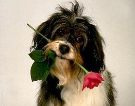 ازدواج مردی با سگ برای دور کردن شر ! + عکس