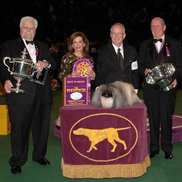 مسابقه نمایش سگ وستمنستر کنل کلاب / بهترین سگ های 2012 + تصاویر