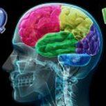 تفاوت IQ و EQ افراد در چیست؟