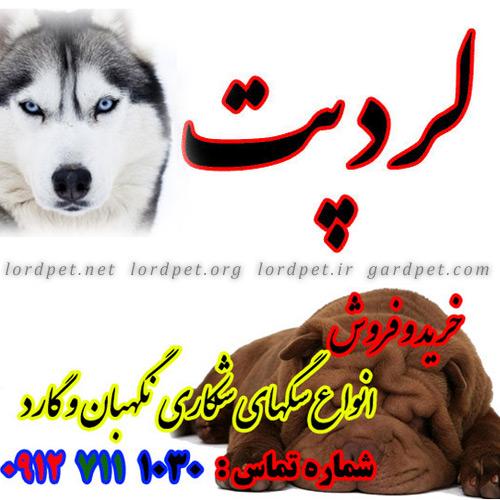 لردپت و انواع سگ های شکاری نگهبان و گارد