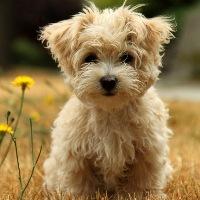 عکس هایی زیبا از سگ های پا کوتاه