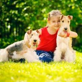 چگونگی نگهداری از حیوانات خانگی