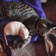 گربه تنبل را موش طبابت ميكند