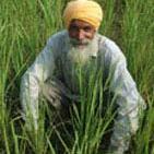 تحریم ایران برنجکاران هندی را ثروتمند کرد