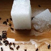 دوازده راه مبارزه با مورچه ها در خانه