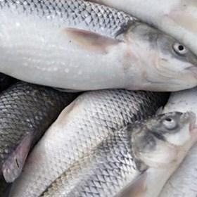 قبل از خریدن ماهی حتما این مطلب را بخوانید