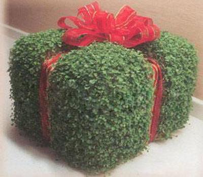 آموزش سبزه هفت سین مدل جعبه کادو