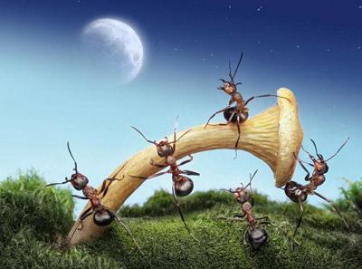 درسهای بزرگ زندگی که می توان از مورچه ها آموخت
