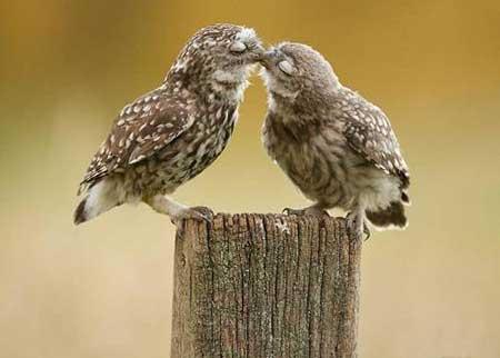 روش های بوسیدن و اثر گذاری در روابط عاشقانه با همسرتان