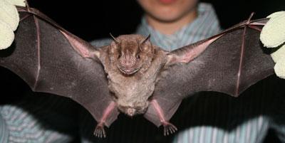 نسل جدید هواپیماهای آینده با الگوبرداری از خفاشها