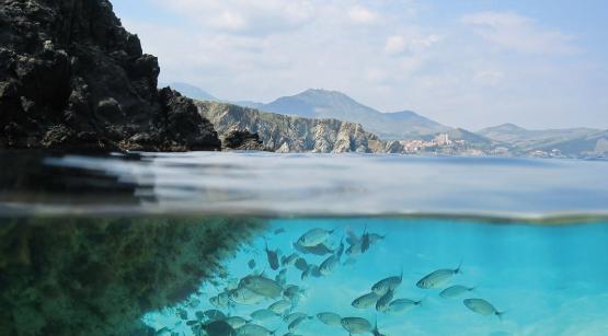 اختراع دختر 12 ساله اقیانوس ها را نجات می دهد؟